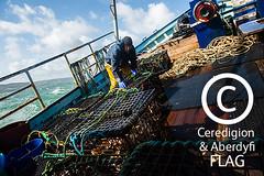 Fisherman with basket of crab, on board the 'Quaker' / Pysgotwr gyda basged o grancod ar gwch y 'Quaker' (Ceredigion Fisheries Local Action Group (FLAG)) Tags: uk wales boat town fishing crab aberystwyth lobster welsh cardiganbay seafish inshorefishing johngorman