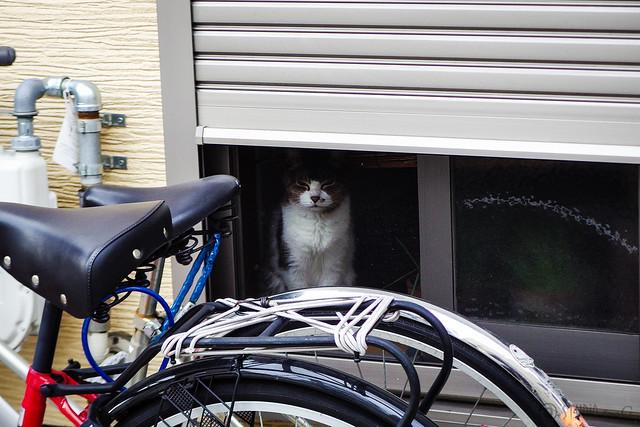 Today's Cat@2015-07-15