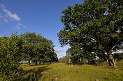 _MAL6612 (Markoliini) Tags: nature landscape nikon natur maisema luonto landskap d800e tamron1530