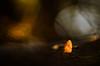 Ahorn (MichaSauer) Tags: maple samara ahorn érable sunset sonnenuntergang macro makro wald forest