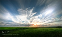 ANGEL WINGS (Justin S Reid) Tags: ifttt 500px field sky landscape sunset nature blue clouds summer beautiful white green peaceful landscapes fields countryside mood colorful atmospheric rainclouds chroma christian wig 1325 wbpa dierjscreensaver