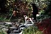 Canyon Trail Park (TJ Gehling) Tags: canyontrailpark park creek baxtercreek woman dog dogwalker cascade waterfall elcerrito