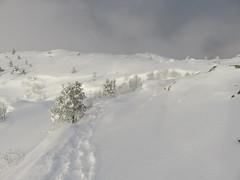 SNOW (Mrs.Snowman) Tags: winter snow høgkubben norway