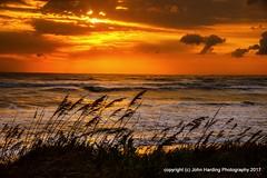 Windswept (T i s d a l e) Tags: tisdale windswept beach coast dunes seaoats dawn sunrise outerbanks winter january 2017