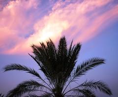 *** (Irina.yaNeya) Tags: uae emirates clouds sky palm tree sunset colors kalba eau nubes cielo palmera árbol puestadelsol الامارات كلباء سماء شجرة غروبالشمس غروب الألوان سحاب شجرةالنخل кальба оаэ эмираты облака небо пальма дерево закат цвета природа nature naturaleza طبيعة