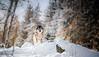 SnowWolf (ラルフ - Ralf OFFLINE) Tags: badenwürttemberg jahreszeiten location naturlandschaft outdoor schnee schwarzwald schwarzwaldpark winter blackforest forest