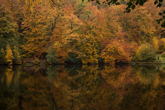 Autumn reflection (Infomastern) Tags: skäralid söderåsen autumn höst lake natur nature naturereserve naturreservat refelection reflektion shjö vatten water