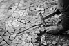 Calçada Portuguesa (4/365, January 4th) (Yannis_K) Tags: cobblestone cobbledstreets calçada portuguesa portugal algarve worker rammer pavement manual labour faro man design traditional paver hammer yannisk nikond7100 nikon85mmf18g