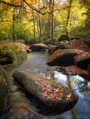 Et au milieu coule une rivière... (Explore 25/01/17) (f.ray35) Tags: huelgoat finistère bretagne brittany breizh bzh tree river rivière automne automn reflets foret forest rochers rock romual effray exterieur