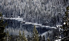 a beautiful place, a tragic past.... (Alvin Harp) Tags: donnerpass donnerlake winteryscene lake reflections trees icesnow snow winterscene mountains frozenlake cabins january 2017 california sonyilce7rm2 fe24240mm alvinharp