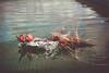 Ellanore011617-14 (MegzyTred) Tags: megzytred beta betafish viking funeral vikingfuneral fishfuneral deadfish goodparenting doingmybest kidsareweird lifeisstrange majesticfishfuneral majestic fish flames fire tinfoil foil boat water cremation burial burialatsea
