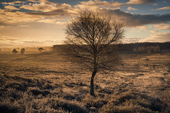 Light In The Valley (.Brian Kerr Photography.) Tags: cumbria winter tree nature landscape plant dog bird cat mountain photography light macro insect flower jetty