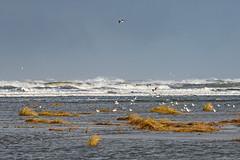 Juist; Strand bei Hochwasser (hardi_630) Tags: insel juist nordsee strand urlaub winter beach northsea sea hochwasser möwen