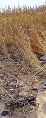 ways of seeing (BoblyP) Tags: boblyp riveralt strange strangelife life northwestengland merseyside formby hightown alt beauty sandbanks mudbanks ugly view waysofseeing waysofseeingbeauty mudflats estuary marramgrass plastic rubbish detritus