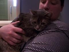(mestes76) Tags: 030616 duluth minnesota cats pets fetty fettucini animalshelter animalallies people strangers