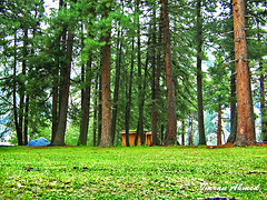 Fairy Meadows (Aawara) Tags: pakistan nature beauty forest landscape north meadows powershot fairy karakoram kashmir areas northern a400 himalayanrange nangaparbat diamir powershota400 fairymeadows northpakistan