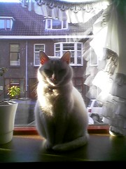Kiararaam (PJ Mirella) Tags: windows sun white kiara catsandwindows