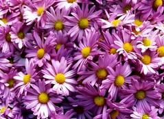 happy birthday A G A !! (nardell) Tags: birthday flowers film thankyou purple farmersmarket pa happybirthday lancaster aga marmolada agad agaful