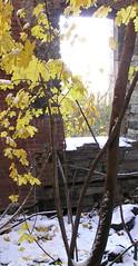 PC060015 (gmpicket) Tags: renwick smallpoxhospital rooseveltisland blackwellsisland nyc ruin architecture landmark historical