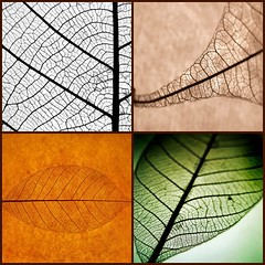 four seasons (Mr.  Mark) Tags: life autumn winter light summer color colour detail macro fall nature topf25 leaves lines season leaf spring fdsflickrtoys perfect mosaic veins vivaldi lifecycle 3132006 markboucher