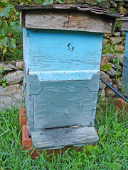 Beehive (allispossible.org.uk) Tags: blue summer green bees honey grapes albania beehive oxfam hives balkan beehives bienen bienenstock shqipris shqipria republikaeshqipris
