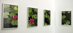 Bathroom art, Cape Town waterlillies (chailey) Tags: capetown waterlillies