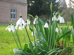 IMG_0491 (Chris_J_L) Tags: cambridge college snowdrops magdalene