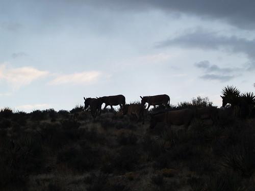 fotos d mujeres cojiendo con burros