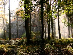 Queenswood (nickestamp) Tags: wood mist forest woods sunbeams queenswood