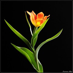 Spring Dancer (Laurence & Annie) Tags: plant flower wow 5faves laurenceshan gtaggroup goddaym1