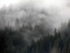 Demystify (Walter Quirtmair) Tags: trees fog digital forest austria march haze 2006 swq takenbywalter gosau powershots2is