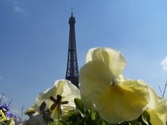Flowers, Eiffel Tower