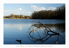 Stricker's Pond (Mingfong) Tags: wisconsin landscape spring story madison april albumcover stories strickerspond  mingfong musicflyer mingfongjan artbrochure sketchoflight mingfongphotography