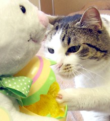 Easter Bunny Isn't Wary, but the Cat Is (Pixel Packing Mama) Tags: 510fav wow catwomen wonder lovely1 whiskers mycats greatshot top20catpix awww catsandkittensset ilovemycat furryfriday flickrwow nuggets cutecat allanimals cmc catlovers heartlandhumanesociety femalephotographers notmycat beautifulcats familyfurrythingsorboth catpix pixelpackingmama meowscollector v2000 catssmalltobig dorothydelinaporter canonpowershota510a520 worldsfavorite everybodywantstobeacat enjoylifehumorpix notmypet commentonmycuteness melfanclub catsworld welovelatte wonderfulunlimited toysbutnotfisherprice curiousclaw hallmarkeasterbunny tobysgroupies catcentury cc2000 favoritedpixset mostinterestingaccordingtoflickralgorithmset cat2000 wowaddonlypicturescommentedwithawowpool favorites5pool wowiekazowiepool justmoggiespool reallyunlimitedpool catsandobjectspool easterworldwide everythingamericapool lolcatsinvitedphotosonlycontestsgoingonnowpool easterworldwidepool views2000pool views1000andupdomesticcatsonlypool allcatsallowedpool uploadedfirsthalfof2006set views20002500pool 2000viewspool easterretro easterovertheyearsset commentedwithwowunlimitedpool 50plusphotographersaged50andbetterpool wowphotospool allwelcomeiamsickofrulesandregulationsnewcontestpool pixelpackingmama~prayforkyronhorman easterworldwidegroup oversixmillionaggregateviews over430000photostreamviews