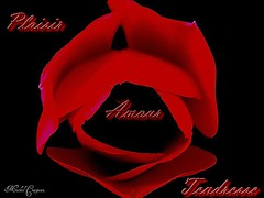 tulipe 3 Gif (Michel Craipeau) Tags: flowers red france flower nature fleur canon rouge noir 2006 powershot amour gif michel plaisir 1000 tendresse pro1 1000views tulipe canonpowershot powershotpro1 craipeau craipeaumichel flowerscraipeau