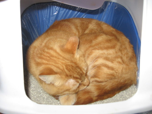 Cat Sleeping in Litter