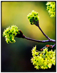 risk (Kelly Angard) Tags: spring risk blossom bloom bud begin kellyangard thecraftygirl