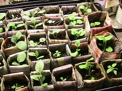 seedlings 2006