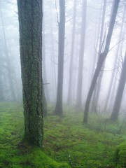 In The Forest (Dru!) Tags: mist canada green wet fog forest bc britishcolumbia january trail yale luminous frasercanyon treetrunks spiritcaves fogography