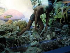 pearl diver diorama