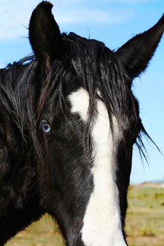 ol' blue eyes