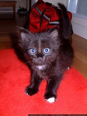 catula @ 2 months old - dscf8290