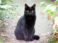 Ortie (La tartine gourmande) Tags: black cat brother cheeky ortie