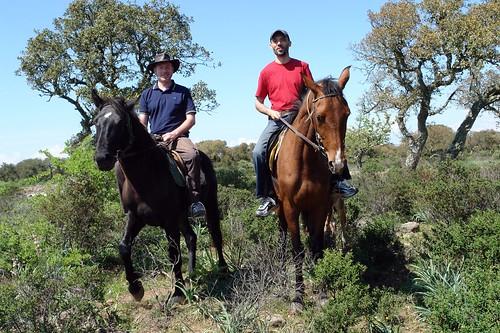 horses mating pics. Horse mating