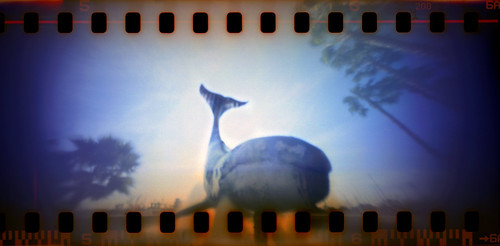 Whale Spring by Chris Keeney, MintyCam pinhole camera photo