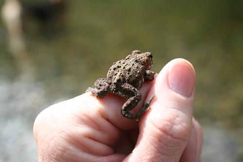froggy escape