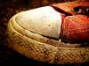 (wakalani) Tags: art found lomo olympus forgotten converse vistas allstar chucks zapatillas encontrado olvidado wakalani mirandoalsuelo masvistas utatafeature