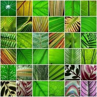 leaf lines 1- 36