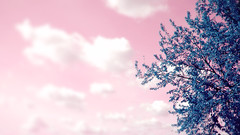 Dreaming (pierofix) Tags: pink blue sky tree clouds nuvole blu rosa cielo 169 albero hue udine tonalità