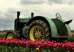 The Deere and the Tulips (back to Carol Kathleen) Tags: oregon bravo 2550favs johndeere woodburn woodenshoetulipfestival